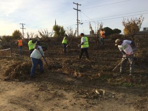 Participants Helped To Clean The 3.5 Acre Community Garden In Firebaugh
